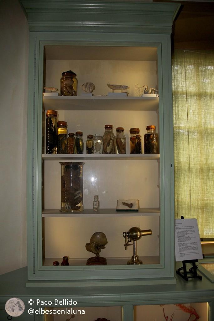 Una de las vitrinas del Gabinete de curiosidades. Foto: Paco Bellido
